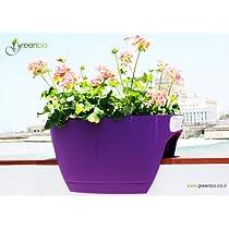 Violet Purple,Greenbo Rail and Deck Window Box