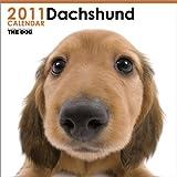 THE DOG ダックスフンド  2011年カレンダー