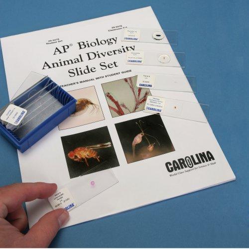 Animal Diversity Slide Set For Ap* Biology, Classroom Set