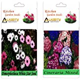 Alkarty Dimorphotheca White Star And Cineraria Mixed Seeds Pack Of 20 (Winter)