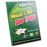 GREEN LEAF ® Piège à Colle pour Rats / Souris - 34 X 22 cm - Respecte l'environnement / sans danger pour l'homme.