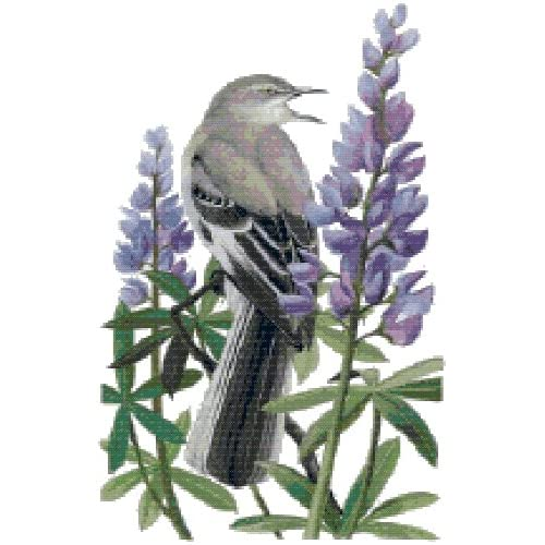 Amazon.com: Texas State Bird and Flower Northern Mockingbird and