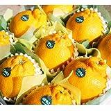 【産地直送】熊本県産 高級 デコポン 化粧箱入り 熊本が誇る至極の柑橘、本物のデコポン!! (中 ( 9玉 2.6kg前後 ))
