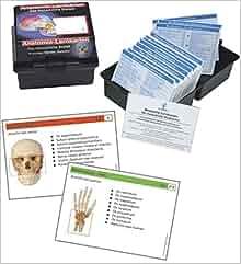 Anatomie-Lernkarten. Das Menschliche Skelett in Lernkartei: Eine