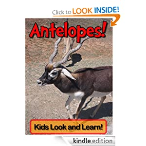 Antelopes! Learn About Antelopes and Enjoy Colorful Pictures - Look and Learn! (50+ Photos of Antelopes)