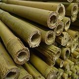 20 x 7ft Yuzet Garden Tonkin Bamboo Canes cane trellis pea bean netting