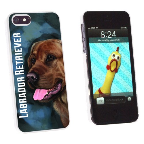 Chocolate Labrador Retriever Blue - Dog Pet - Snap On Hard Protective Case for Apple iPhone 5 5S - White