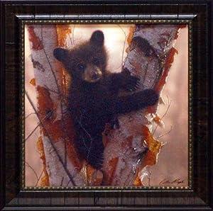 Curious Cub I framed print by Colin Bogle bear print