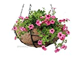 GreenAge Coco Fiber Full Circle Hanging Planter Pot with Metal Frame, Hanging chains and Free Pot Filler --Size 10 inches- 1 Pc