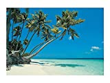 1 X Tropical Beach Backdrop Banner Luau Photo Booth Decoration (3 pcs)