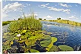 Canvas Prints of Water lilies and reeds from Ardea Wildlife Pets Reviews