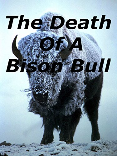 The Death Of A Bison Bull