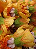 30 Mixed Colors FLOWERING MAPLE (Chinese Bell Flower) Abutilon Hybridum Shrub Bush Small Tree Seeds