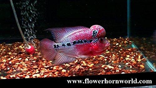 Pictures of petsmart fish for Petsmart fish guarantee