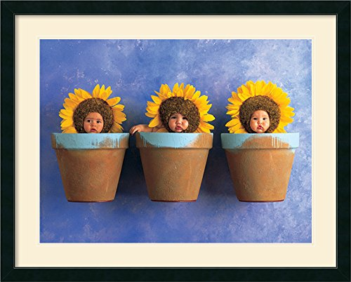 Sunflower Trio By Anne Geddes Framed front-810129