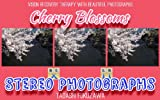 Cherry Blossoms / Stereo Photographs