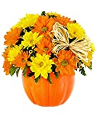 Flowers - The Daisy Pumpkin Patch