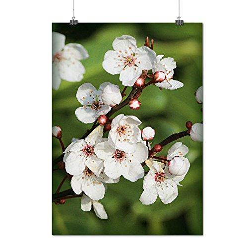 cerise Fleur Beau Arbre Matte/Glacé Affiche A3 (42cm x 30cm) | Wellcoda