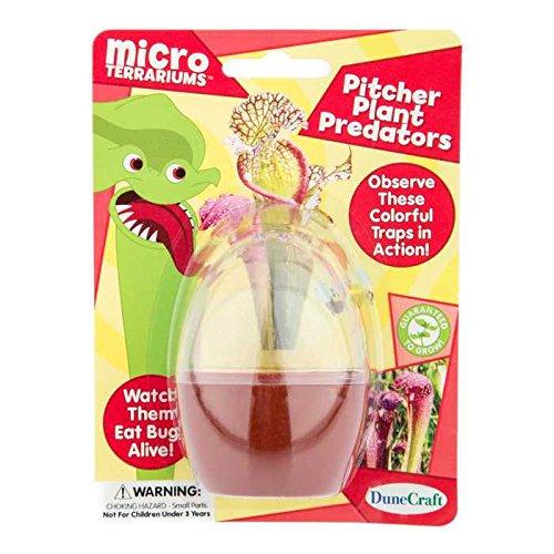 Pitcher Plant Predators Micro TerrariumNew by: CC (Pitcher Plant Predator compare prices)