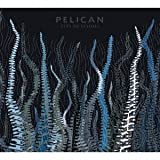City of Echoes [+Bonus Dvd] by Pelican (2007-05-05)