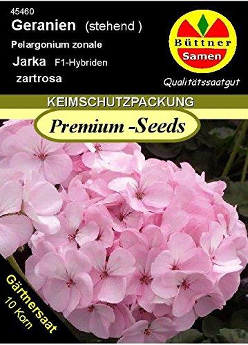 geranien pelargonium zonale jarka f1 10 korn frische samen. Black Bedroom Furniture Sets. Home Design Ideas