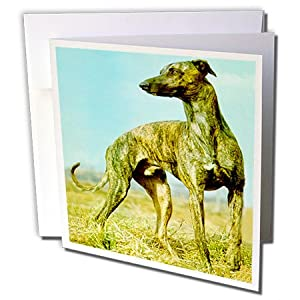 gc_484_1 Dogs Greyhound - Brindle Greyhound - Greeting Cards-6 Greeting Cards with envelopes