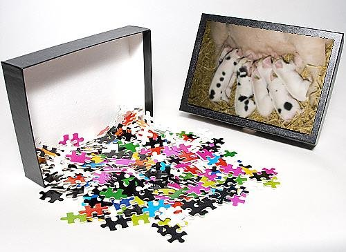 Photo Jigsaw Puzzle Of Pigs - Gloucester Old Spot Piglets Sucking From Sow front-962578