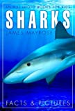 Shark Facts and Cool Pictures. Animal Photo Books for Kids.