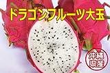 沖縄県産フルーツ ドラゴンフルーツ白1kg