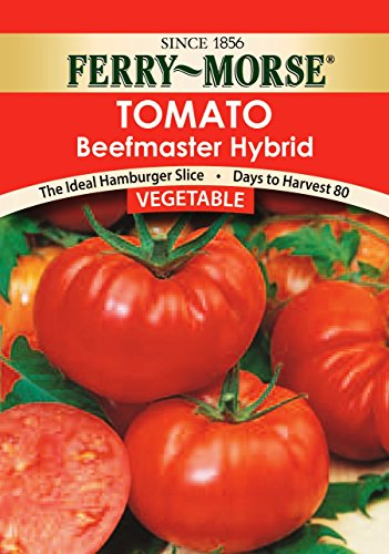 Celebrity Hybrid Tomato Seeds - Park Seed