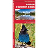 British Columbia Birds: A Folding Pocket Guide to Familiar Species (Pocket Naturalist Guide Series)