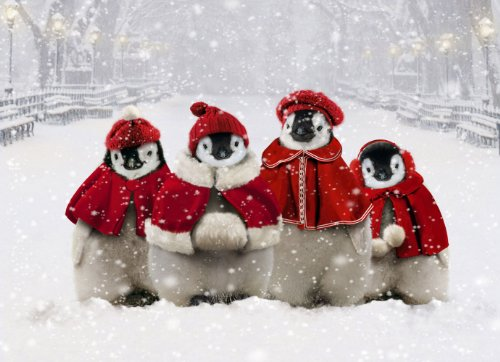 Avanti Christmas Cards, Caroling Penguins, 10