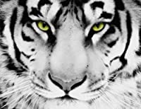 LARGE WHITE TIGER CANVAS ART 26 x 20 inches box canvas chunky frame ready to hang