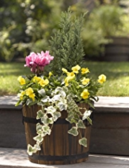 Small Planted Wooden Barrel