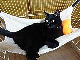 猫 小型犬 用 あったか ハンモック ベッド ハート クッション 付き (秋 冬用)