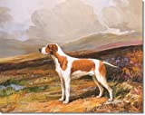 Reuben Ward Binks 1934 - Lemon & White Pointer - Gallery Wrapped Canvas Print