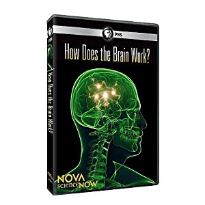 Amazon com nova science now how does the brain work n a movies