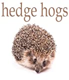 Hedgehogs Pictures and Fun Facts