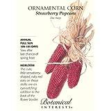 Strawberry Popcorn Ornamental Corn Seeds - 6 grams