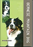 Bernese Mountain Dog Packages