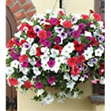 100 Pcs Garden Petunia Petals Flower Seeds For Garden Petunia Semillas De Petunias Flower Seeds Rare For DIY Home...