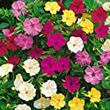 Outsidepride Four O'Clock Seed Mix - 1/4 LB