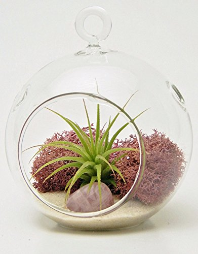 Bliss Gardens Mini Air Plant Terrarium Kit With 3 Round Glass / Pink Moss, White Sand And Rose Quartz