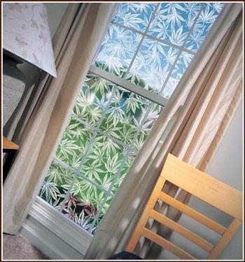 Amsterdam Clear Etched Glass Marijuana Leaf Window Film by Wallpaper For Windows