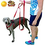 Dog Leash Dual Handled Red Nylon 8-ft Extra Long- Large or Small Dogs - Soft Padded Handles One Inch Wide - One Dog Double Handles