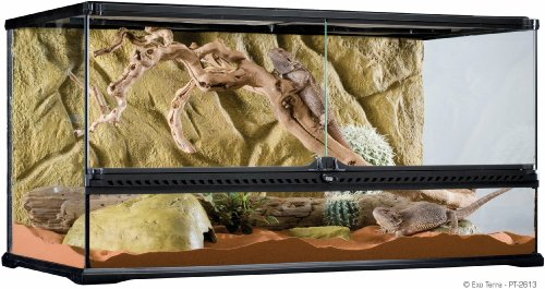 Exo Terra Glass Terrarium, 36 by 18 by 18-Inch (Bearded Dragon Tank compare prices)