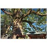 和歌山県 那智勝浦町 クスノキのポストカード葉書はがき Photo by絶景.com