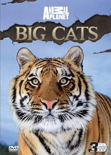 discovery-channel-big-cats-dvd-edizione-regno-unito