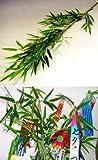 山久 七夕飾り お盆に 手入れ簡単 シルクフラワー 「笹竹」 (大サイズ約120cm) CT触媒加工1606-0013-tanp【造花】