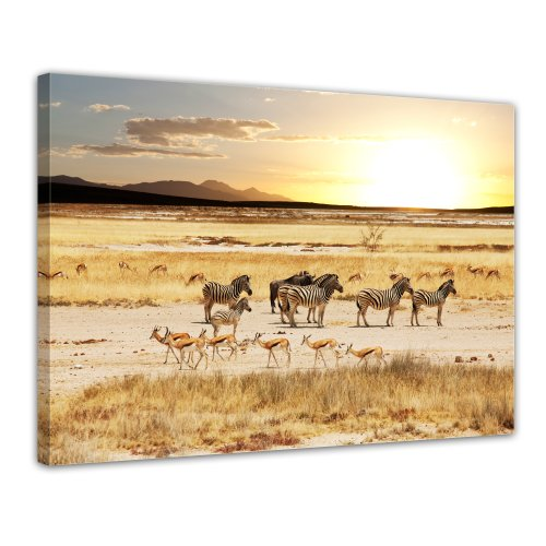 Bilderdepot24 Leinwandbild Afrikanische Savanne - 70x50 cm 1 teilig - fertig gerahmt, direkt vom Hersteller